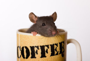 mouse+in+coffee+cup.jpg