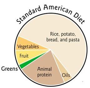 Standard+American+Diet+Pie+Chart.jpg