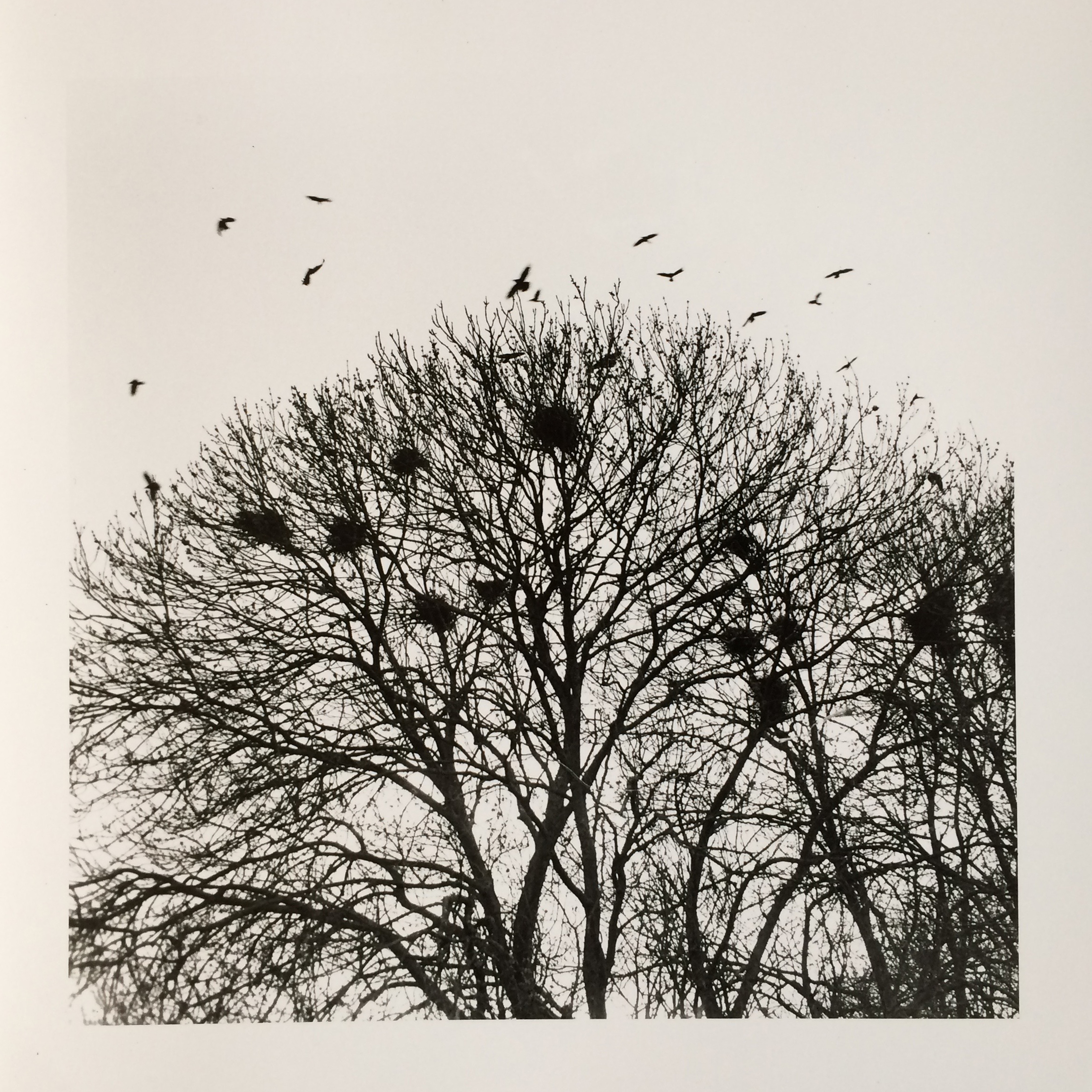 'Rooks Nest', Lotte Attwood, Hand-printed photography on silver bromide fibre based paper, 35x35cm
