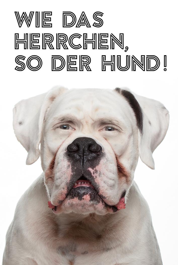 #Hundeportraits.jpg