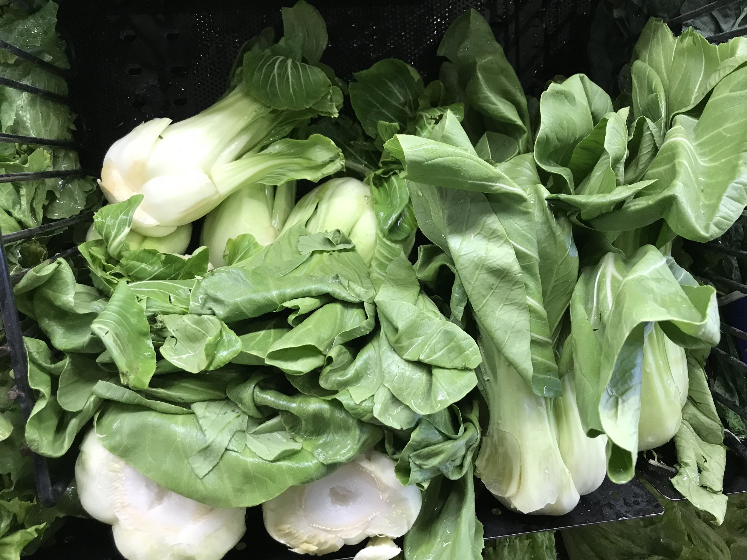 Bok Choy is great chopped up and satayed with sea salt, garlic and olive oil.