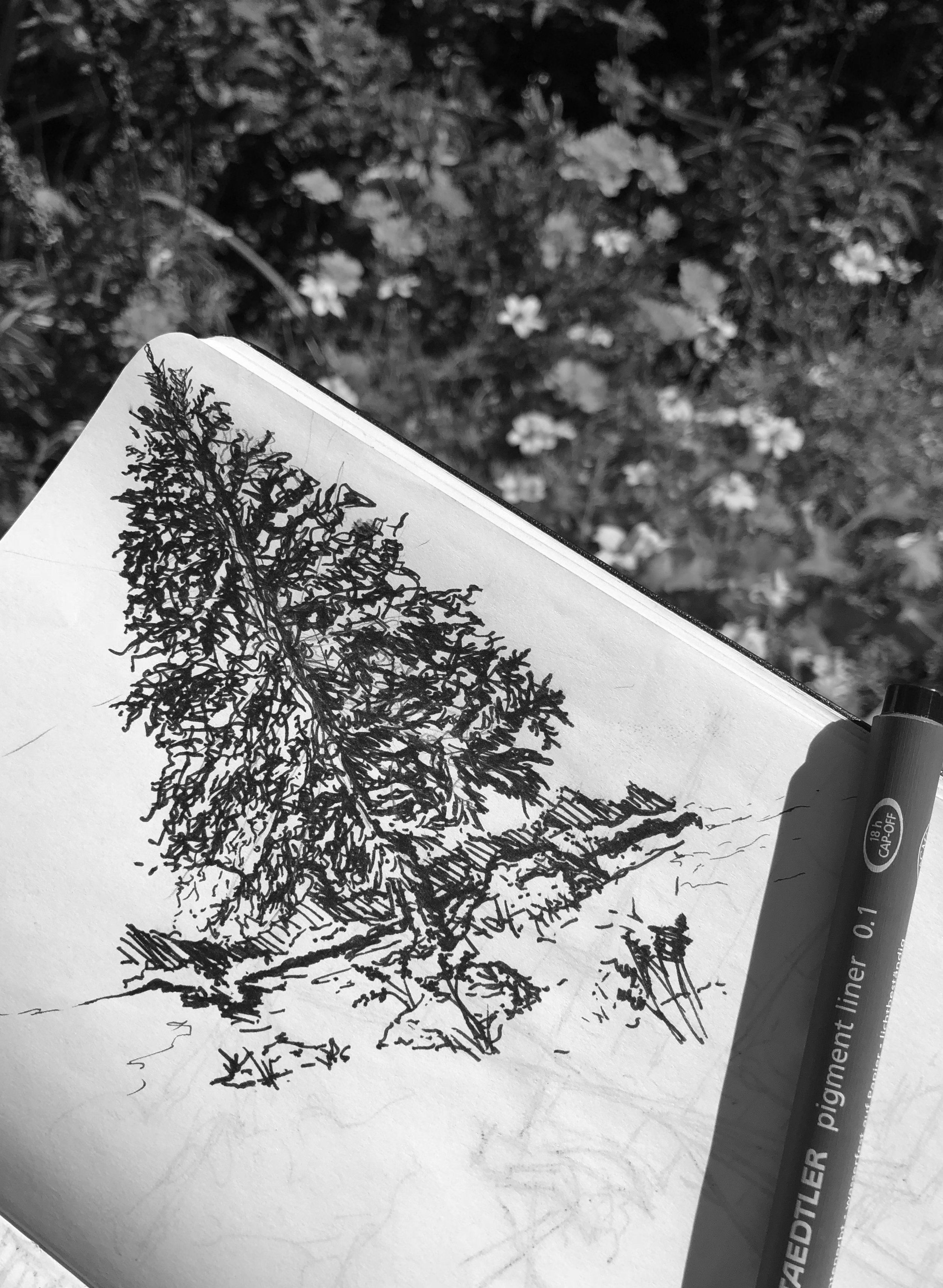 Simple evergreen sketch.