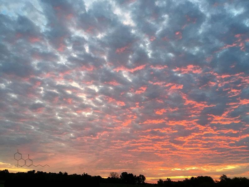 Sunset_THC.jpg