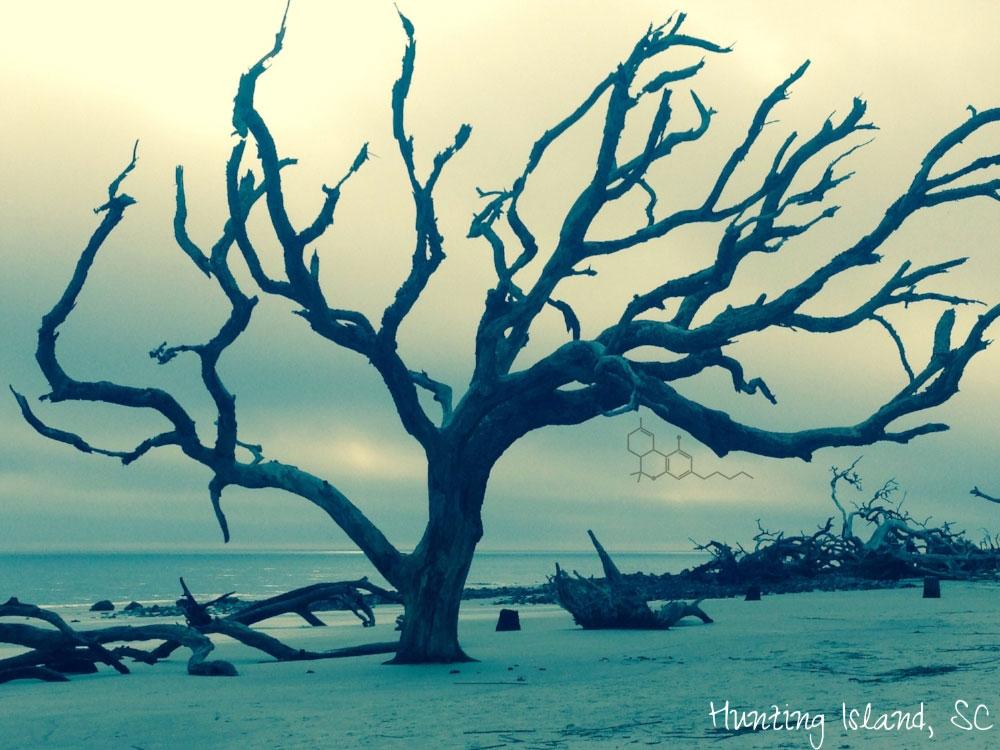 huntington_island-THC.jpg