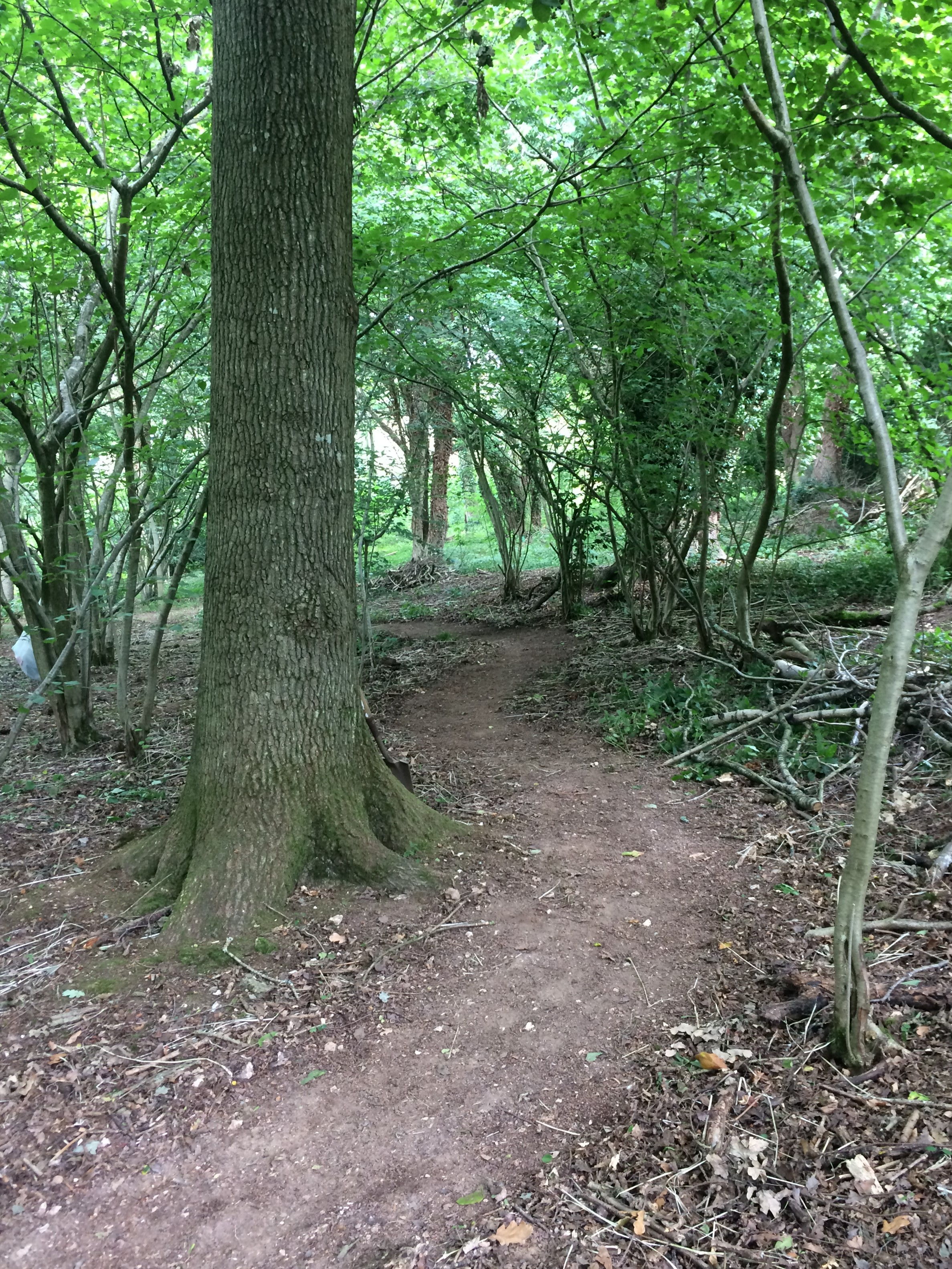 Path clearing June 2017.JPG