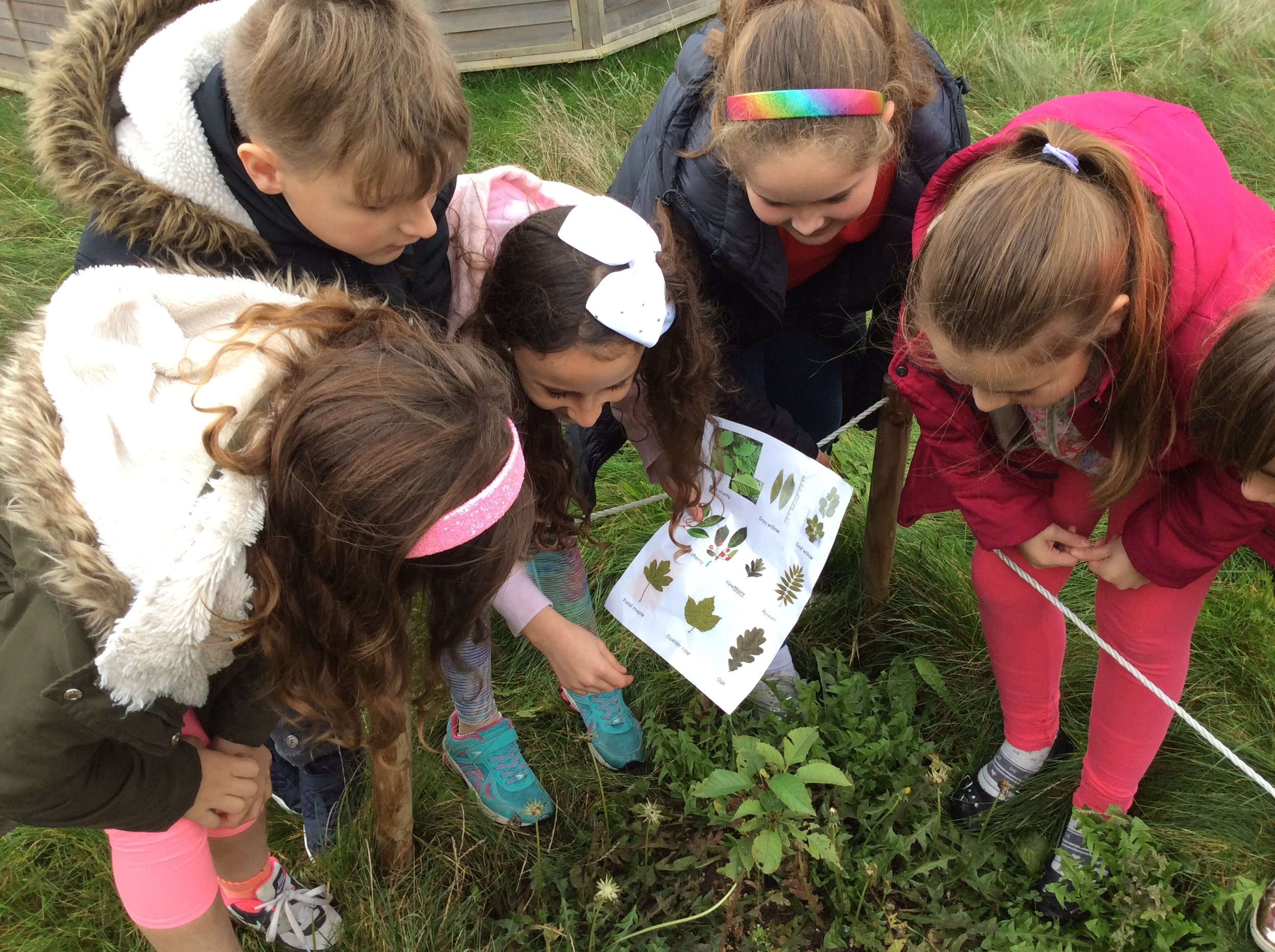 P Cross Identifying trees in our nursery bed 19-10-17.JPG