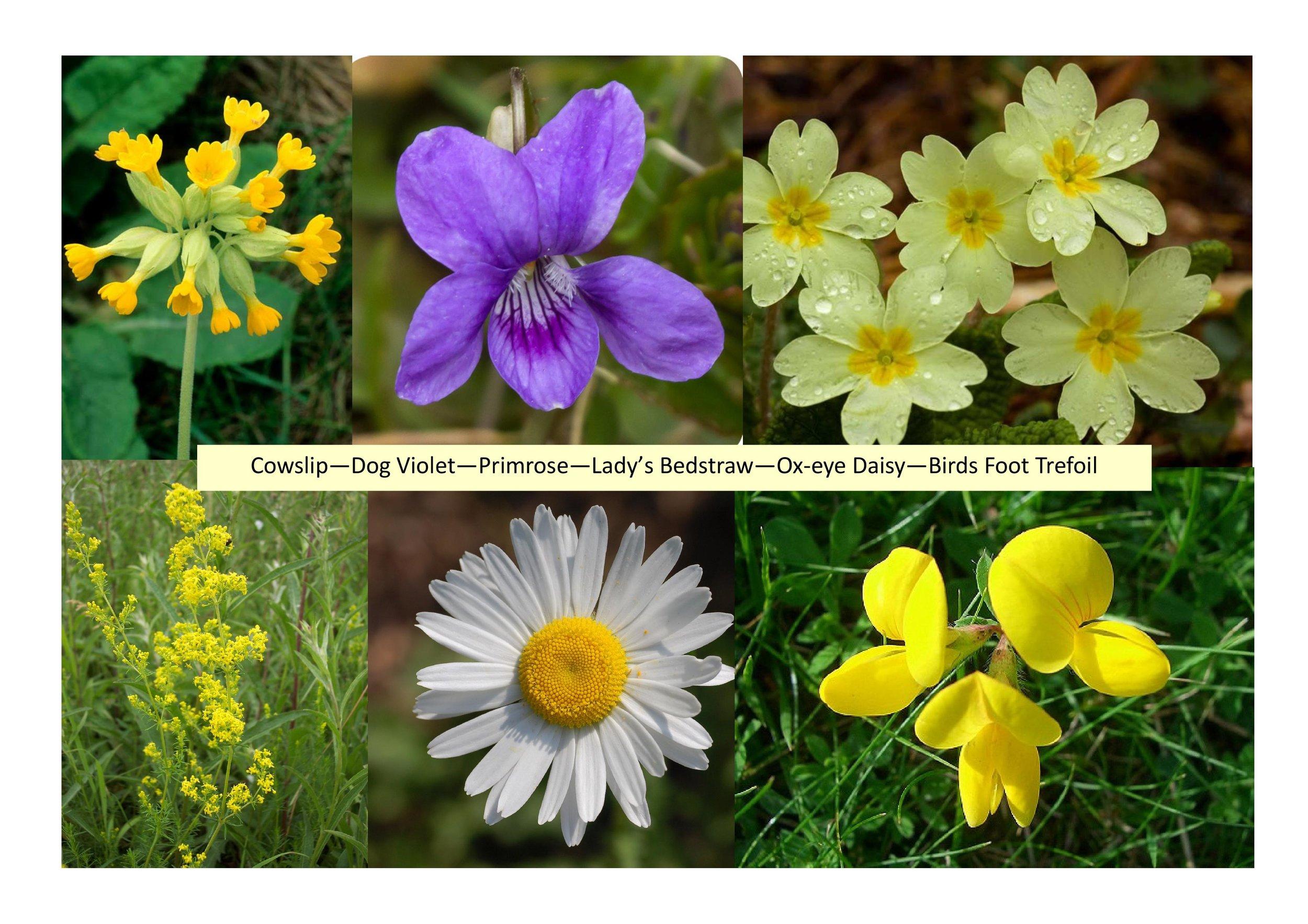 6 Flowers.jpg
