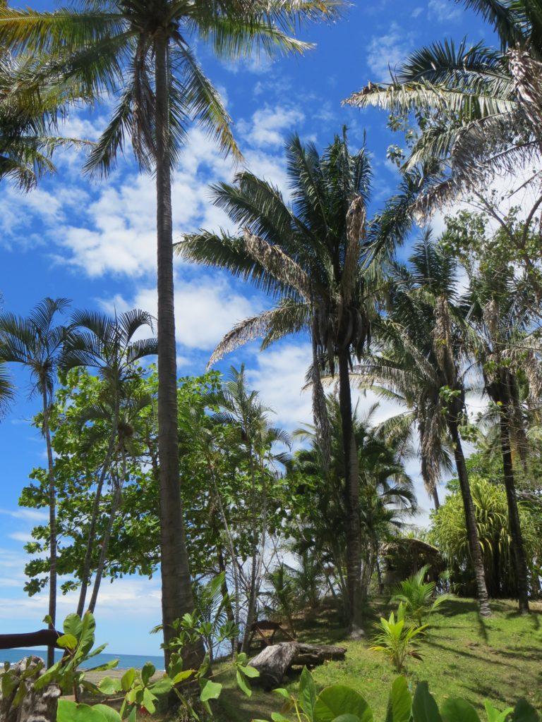 Saskia_Schreiber_Retreat_Costa_Rica_IMG_1439.jpg