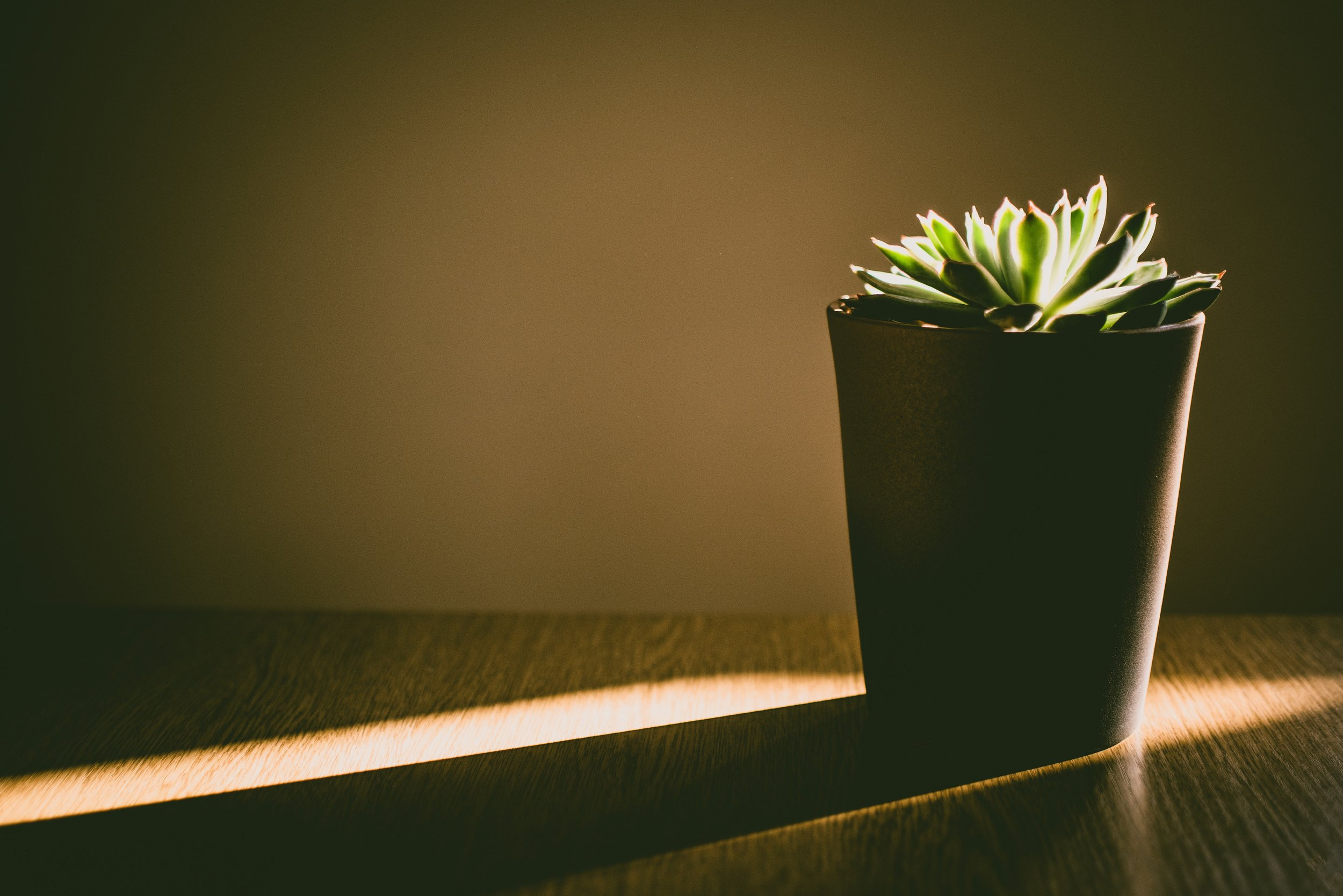 Succulent is sustained only by its desperate will to live…
