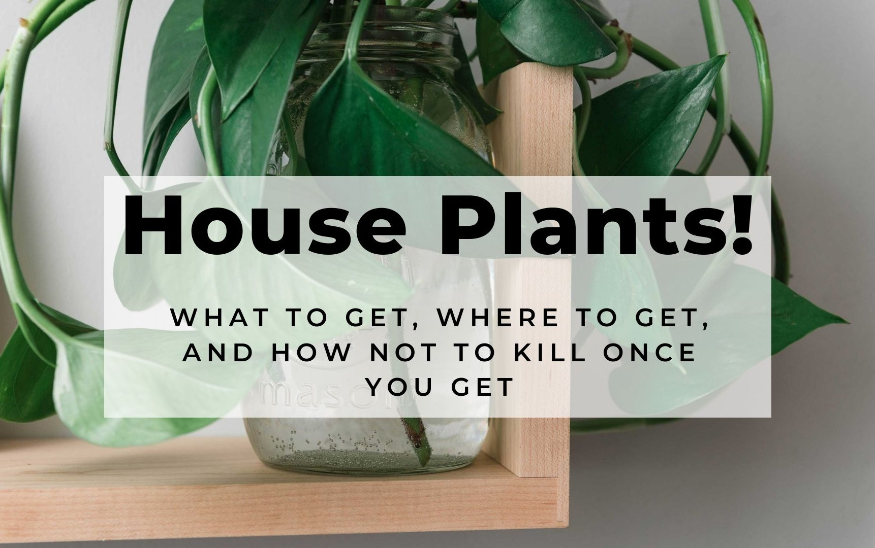 House+Plants%21+How+To+Get+Them%2C+Where+to+Get+Them%2C+and+How+Not+To+Kill+Them+When+You+Get+Them.jpg