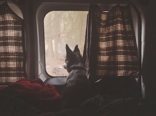 Campervans —  Dog Approved. . . . . . . #cascadecampers #campervan #campervanmagazine #vanlife #pnw #roadtrip #camping #sleepwherever #travel #vans #optoutside #weekend #pnwonderland #unitedstates #washington #adventure