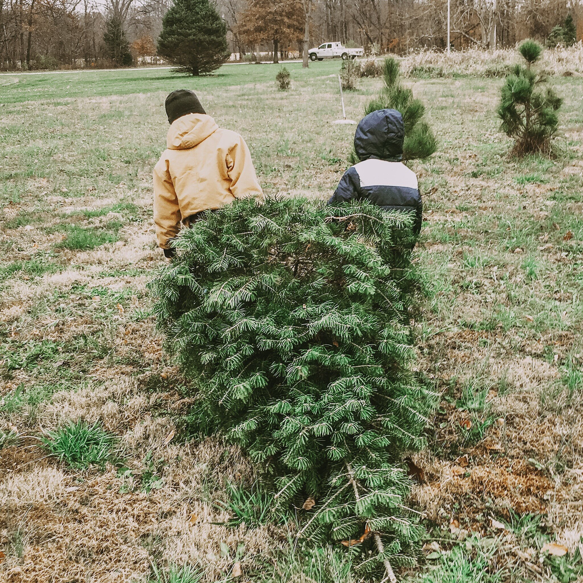 Beau and Braxton found just the right tree for Christmas at the Farm a few years ago. There's nothing better than going to the Christmas Tree Farm to get that fresh Fir. And aren't they darling, I just cant help myself. I love looking back on all our Christmas memories.
