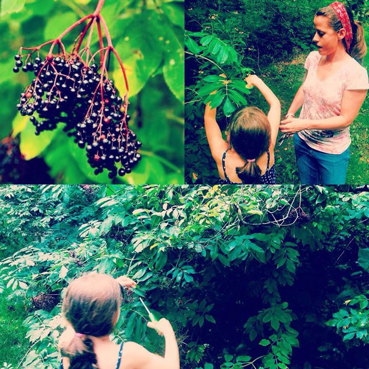 Elderberry-Image.jpg
