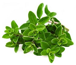 Sweet Marjoram Essential Oil | Mindfully Made For You