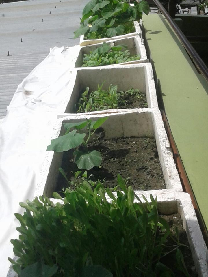 Baby plants.jpg