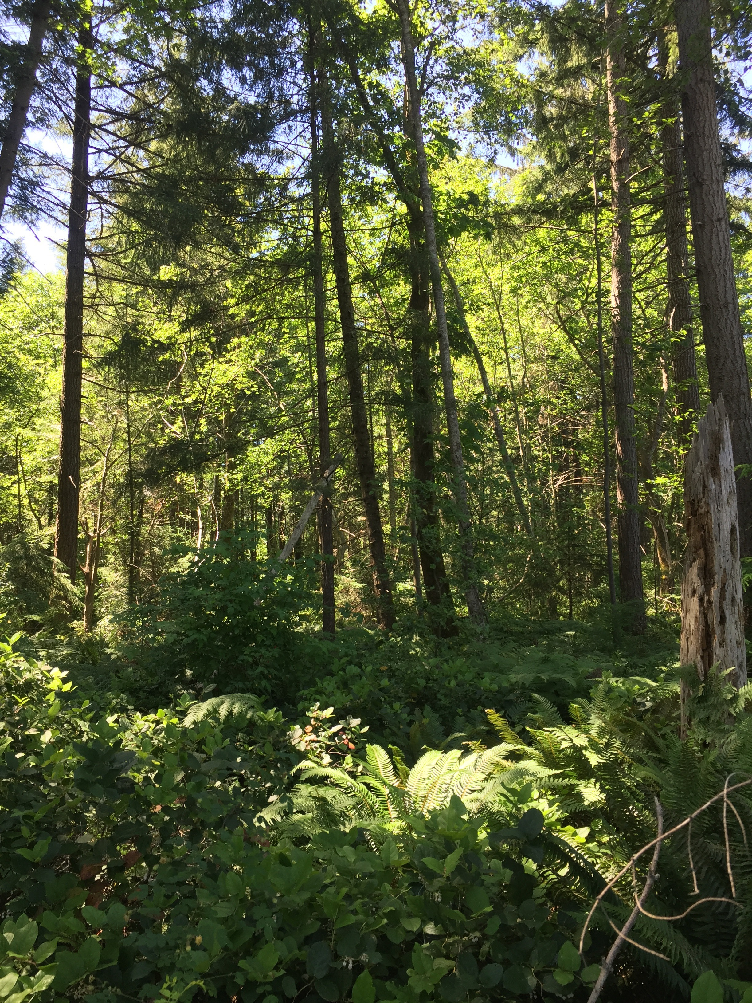 The Lannan Forest in Comox.