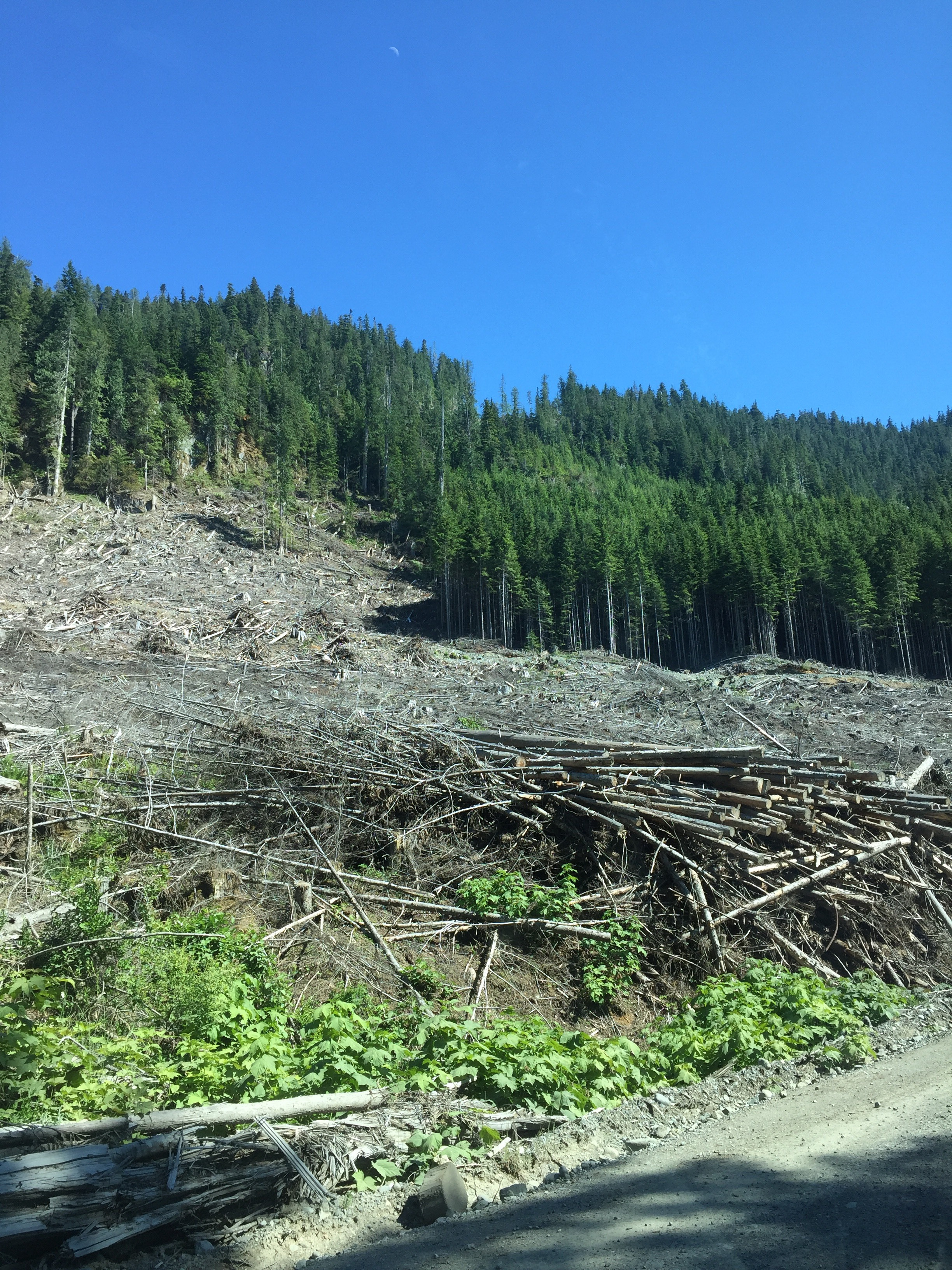 Clearcut along logging road outside Sayward, with a moon rising.