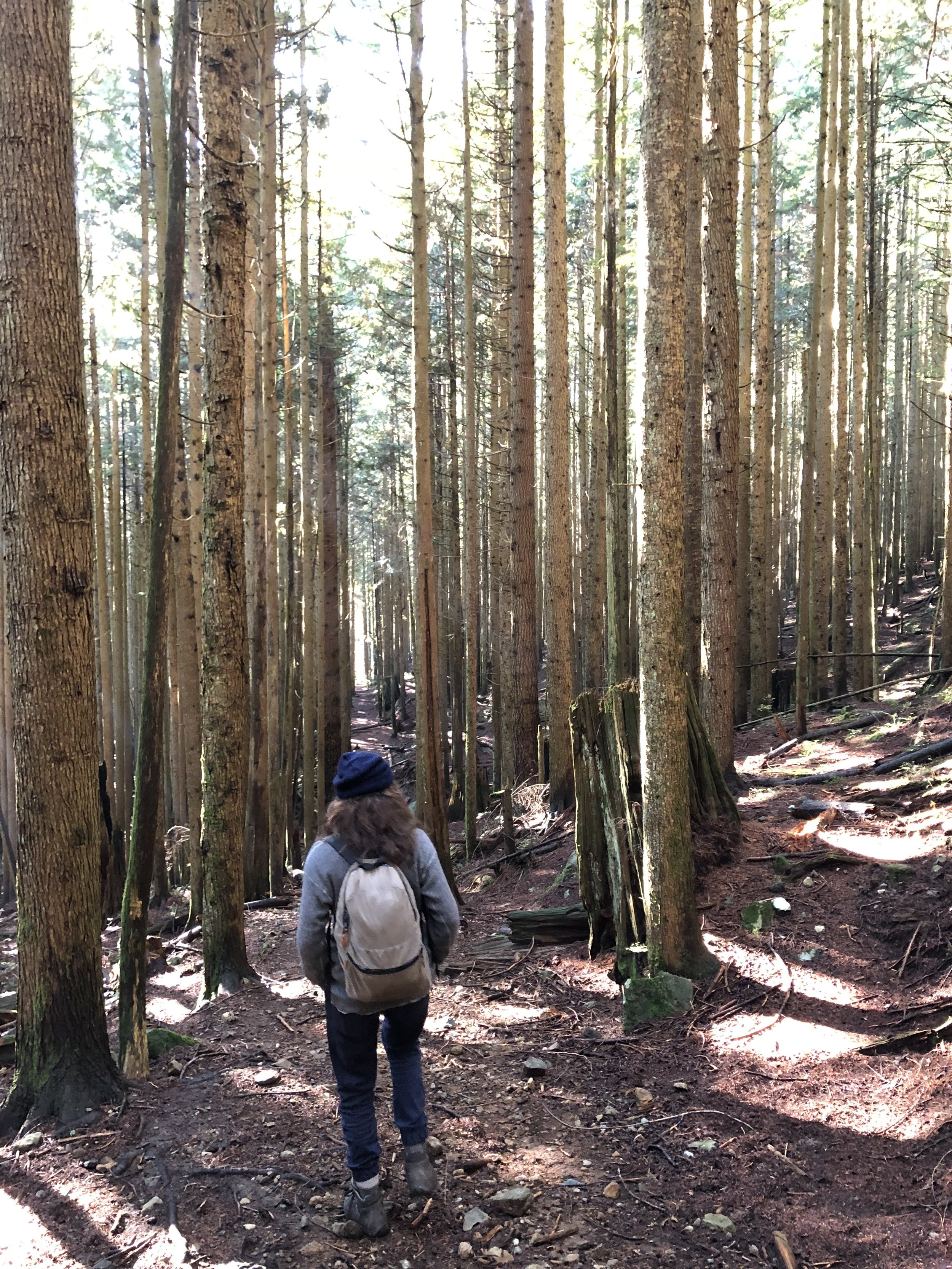 Walking along the old logging railway. Photo: Stephen Hui.