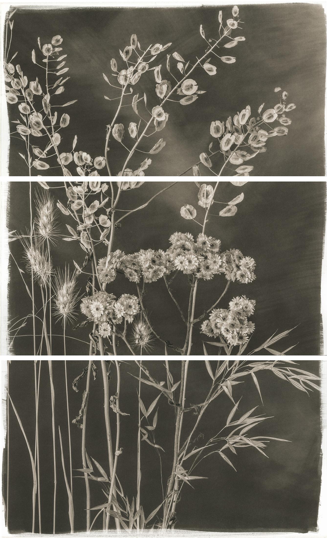 Valley Grasses V