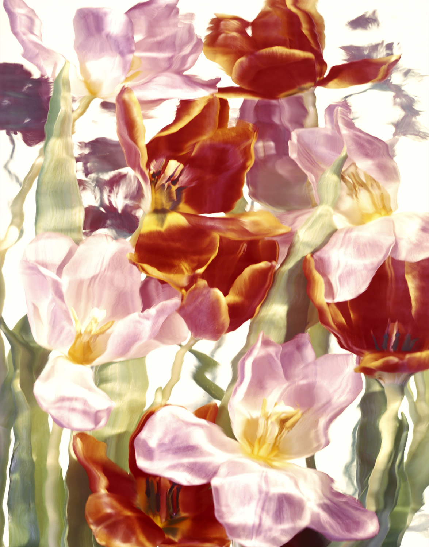 Tapestry Orange Tulip