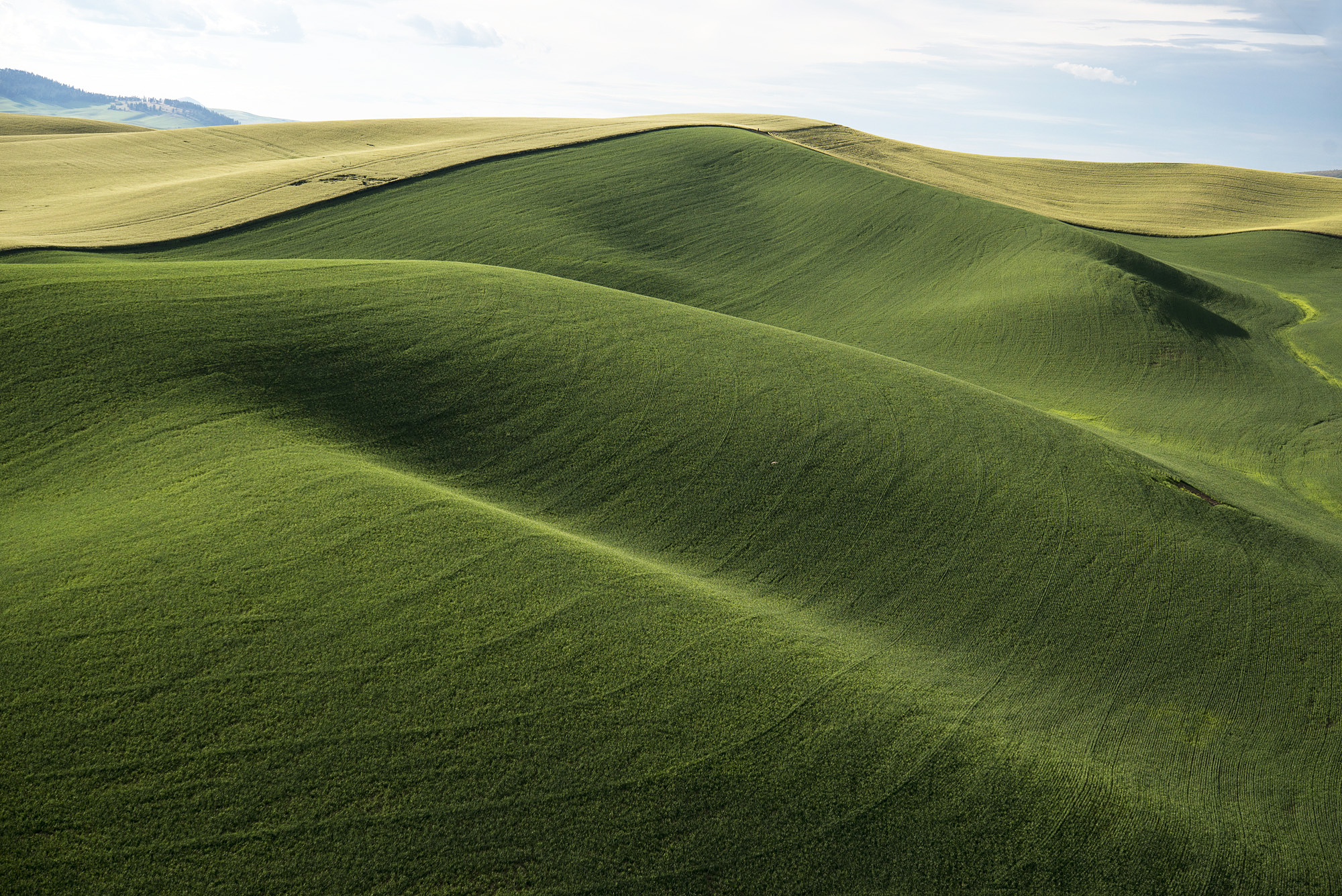 View of the Palouse, Washington, 2018