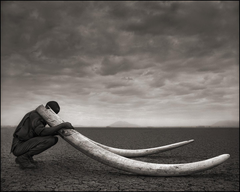 Ranger With Tusks of Killed Elephant, Amboselli 2011