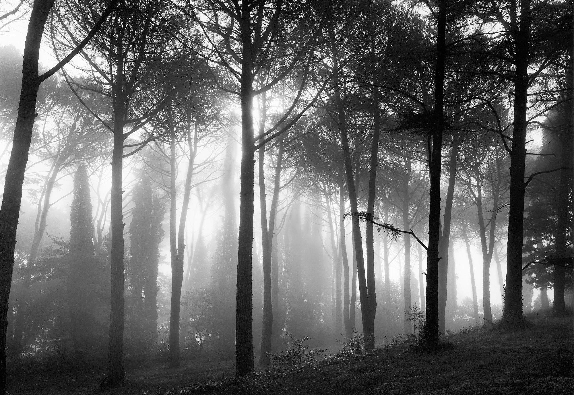 Woods, Umbria