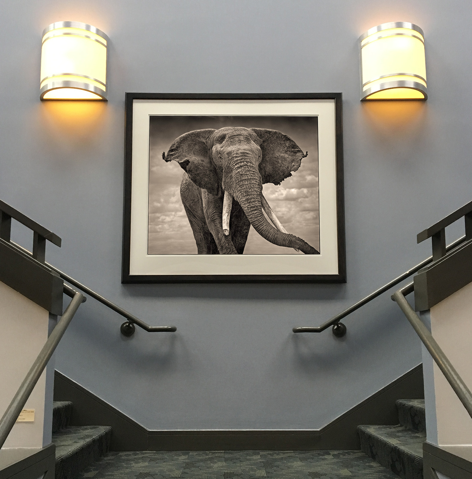 Nick Brandt   - Elephant With Tattered Ears