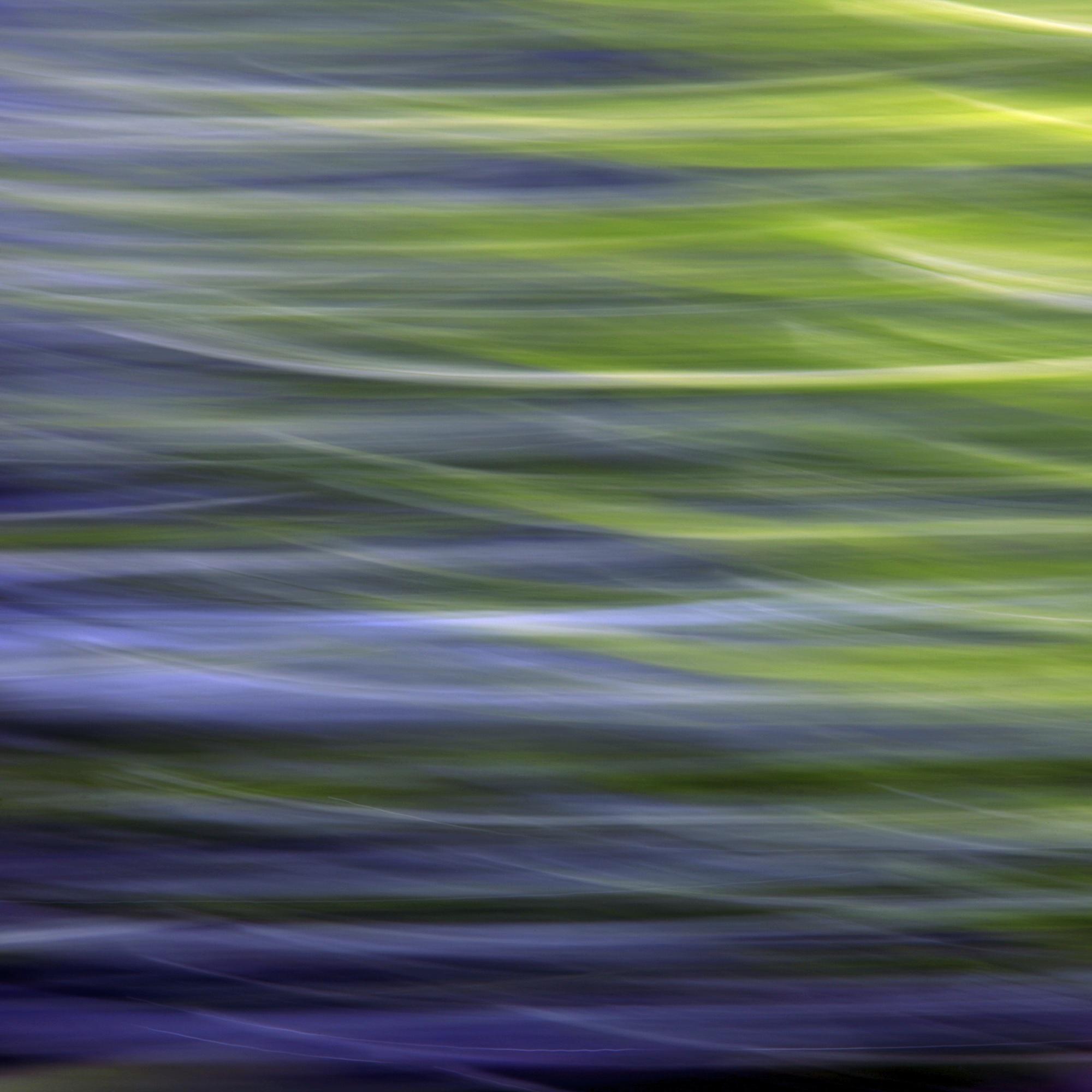 Purple Salvia 1-1 2012