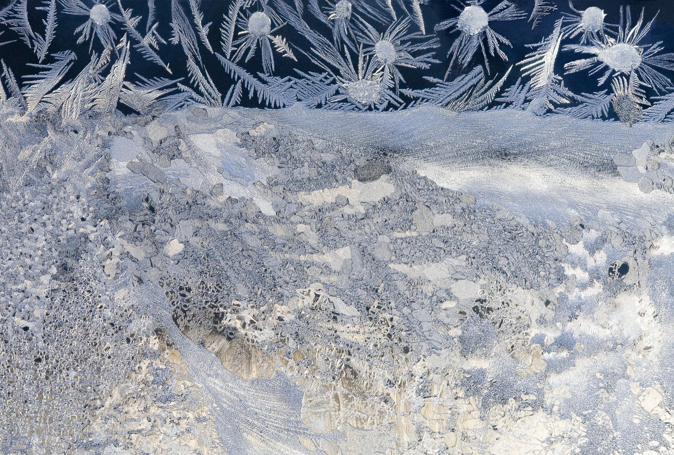 Cy DeCosse -  Snow Daisies