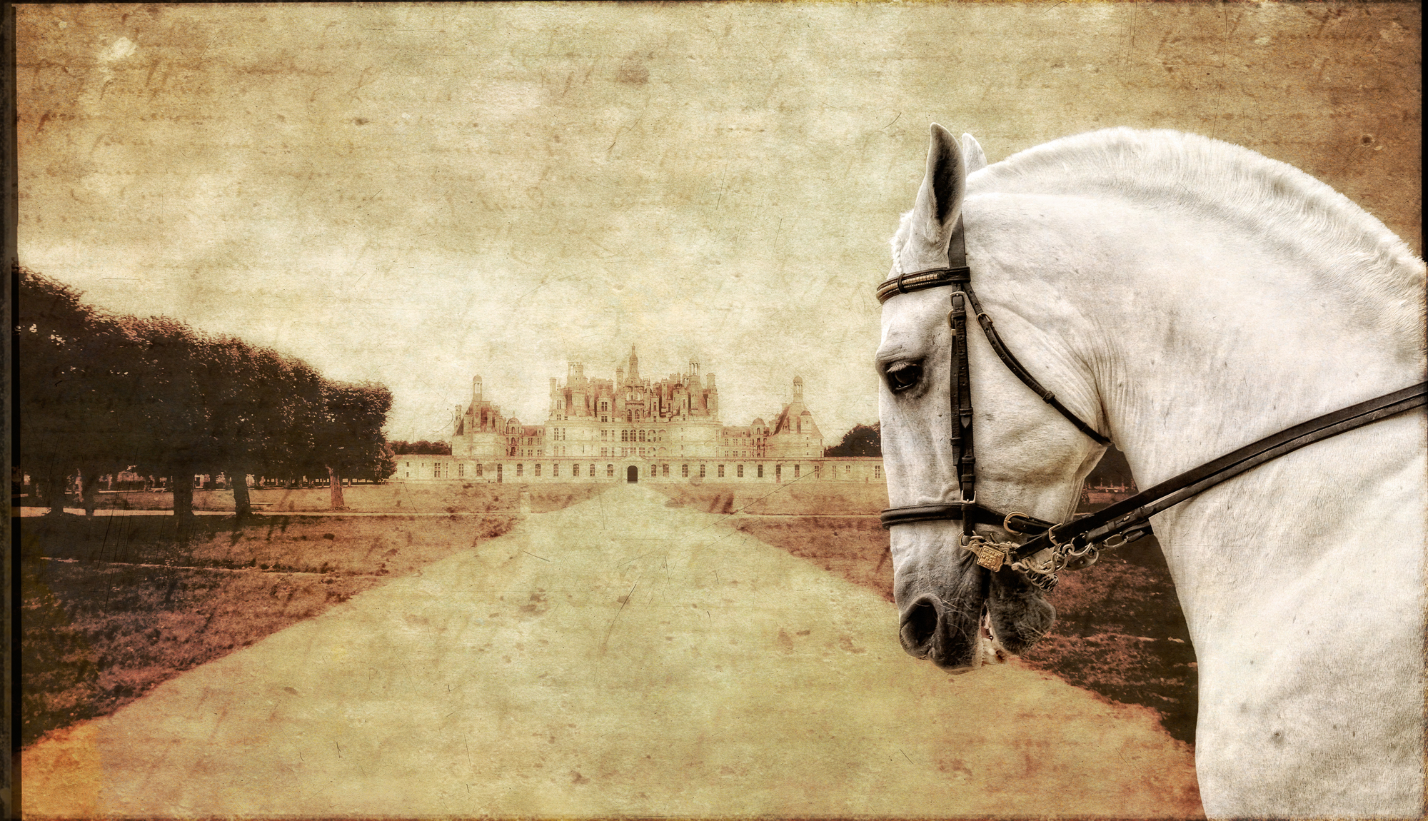 Doug Landreth -  Royal Stallion