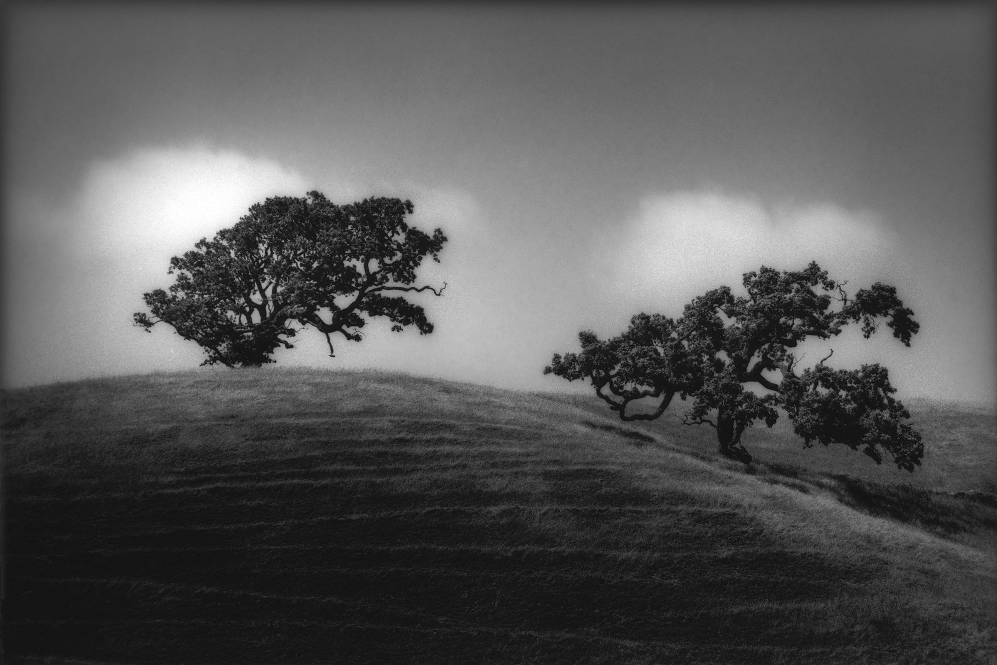 Jeff Zaruba -  Two Trees, West Marin