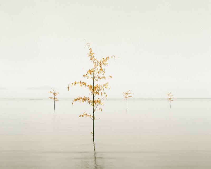 Orange Leaves, Ariake Sea, Kyūshū, Japan, 2010