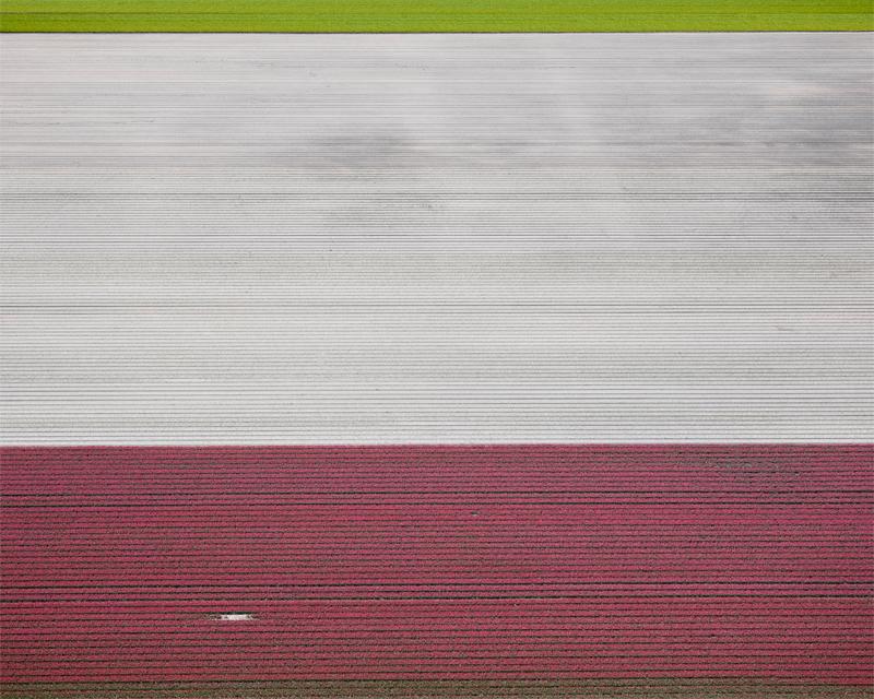 Veld 02, Noordoostpolder, The Netherlands, 2016