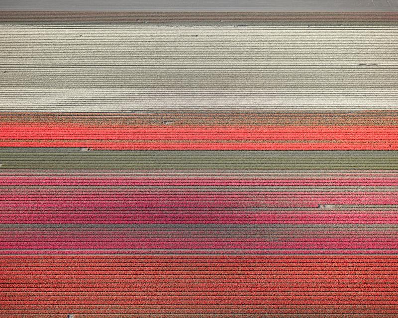 Veld 09, Noordoostpolder, The Netherlands, 2016