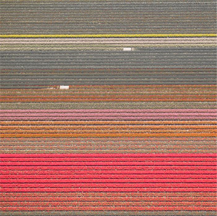 Veld 15, Noordoostpolder, The Netherlands, 2016
