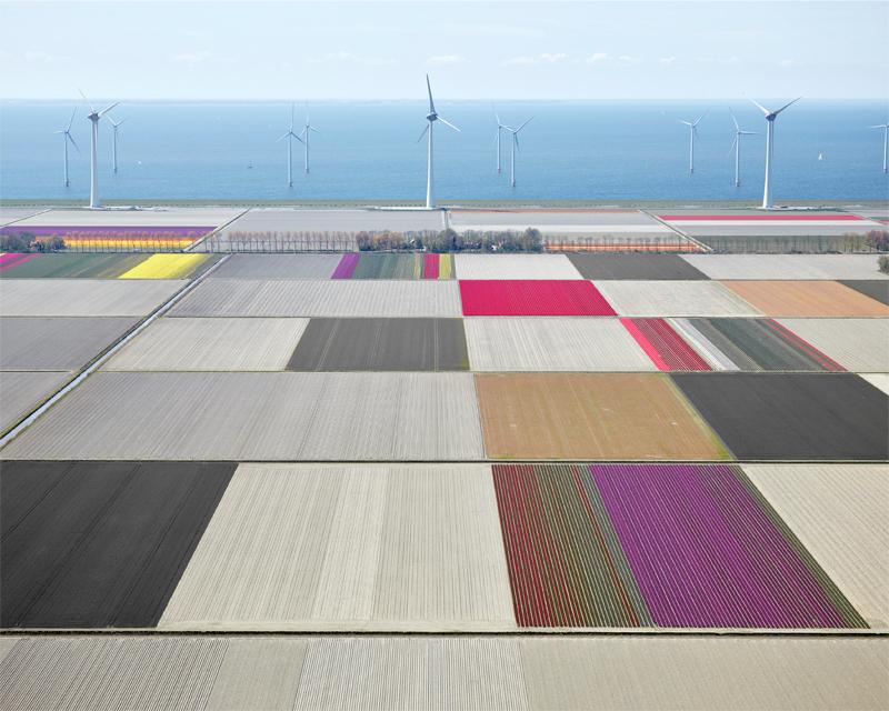 Tulips and Turbines 01, Noordoostpolder, The Netherlands, 2016