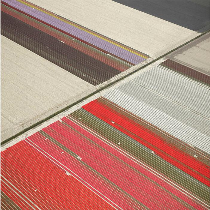 Veld 23, Noordoostpolder, The Netherlands, 2016