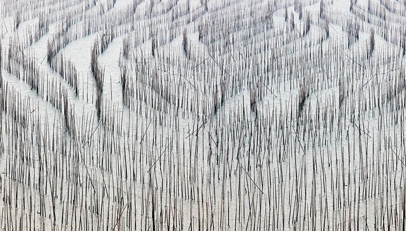 Bamboo 1, China, 2017