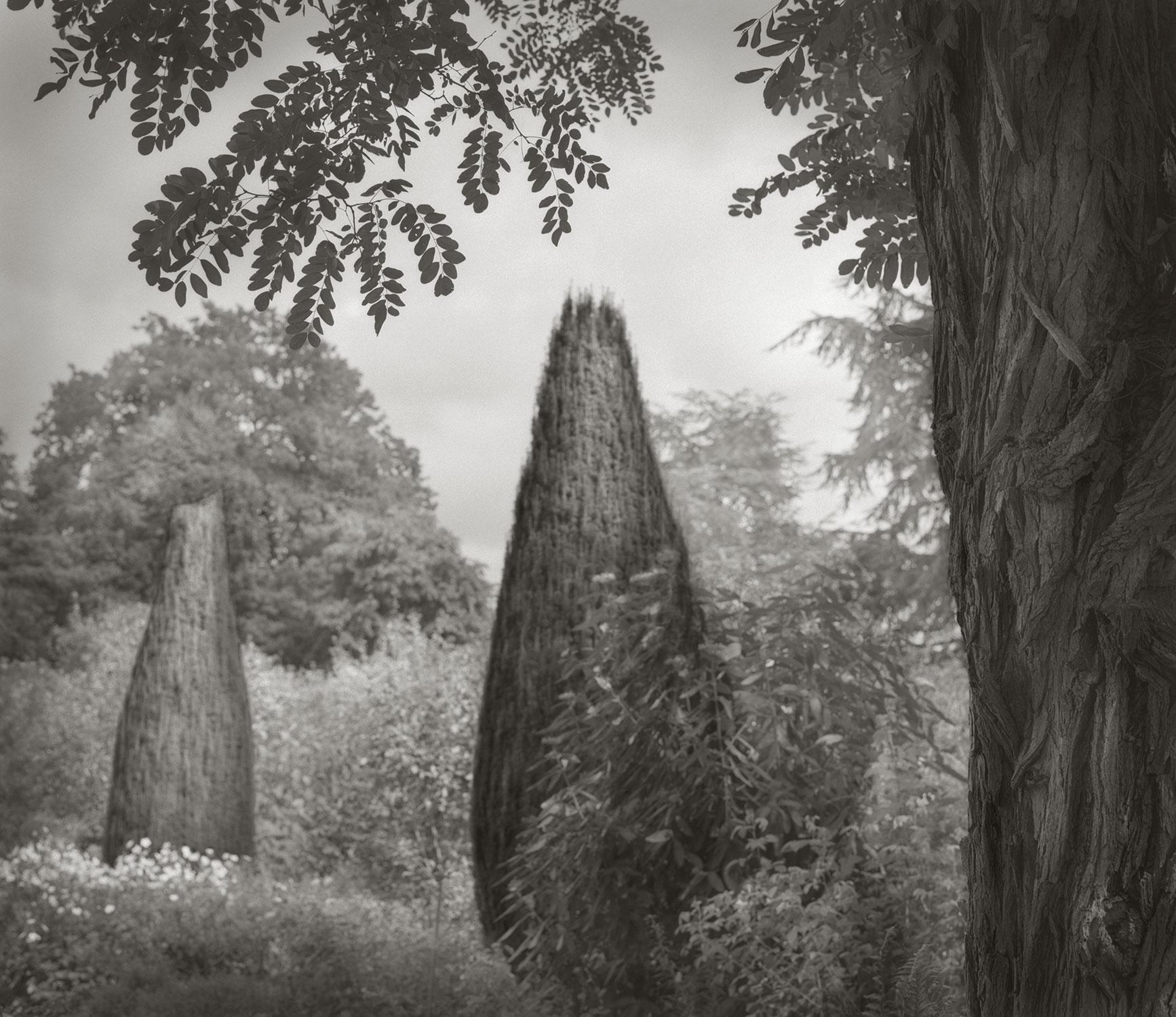 Trees Hidcote