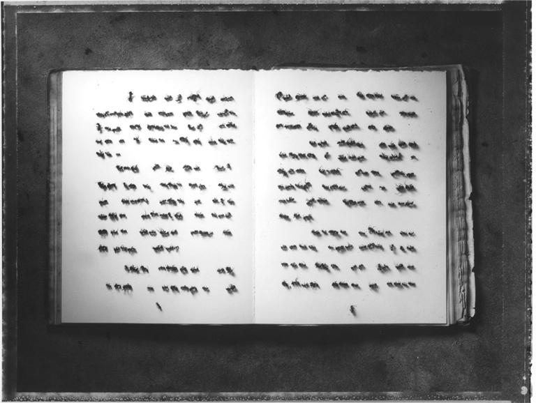 Sean Kernan -  Ant Book
