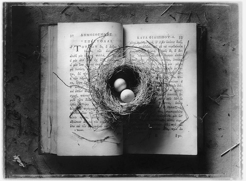 Sean Kernan -  Bird's Nest Book
