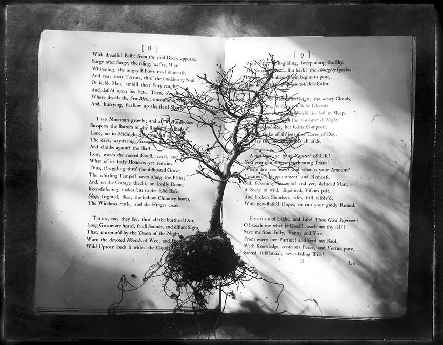 Sean Kernan -  Book with Tree
