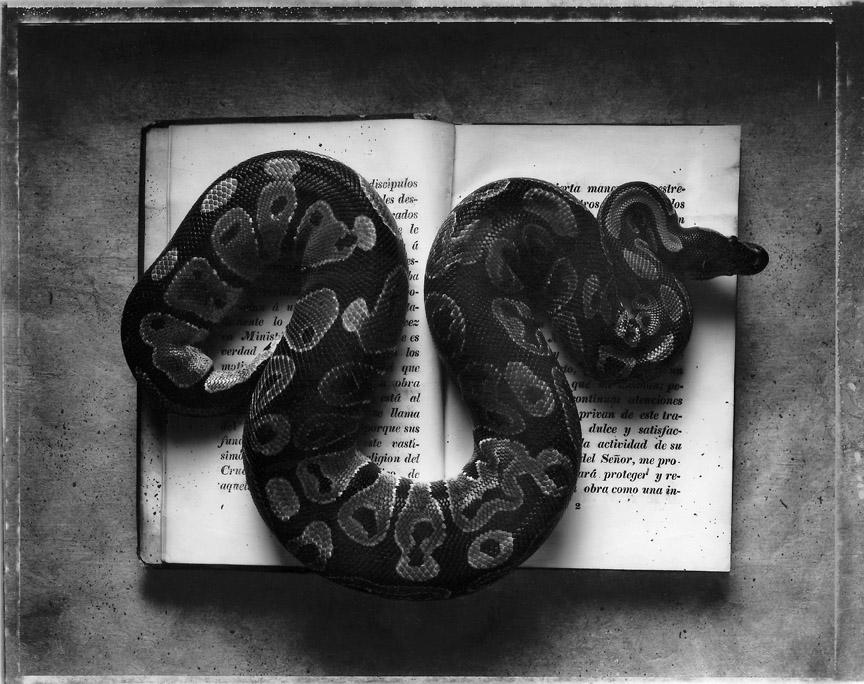 Sean Kernan -  Snakegray