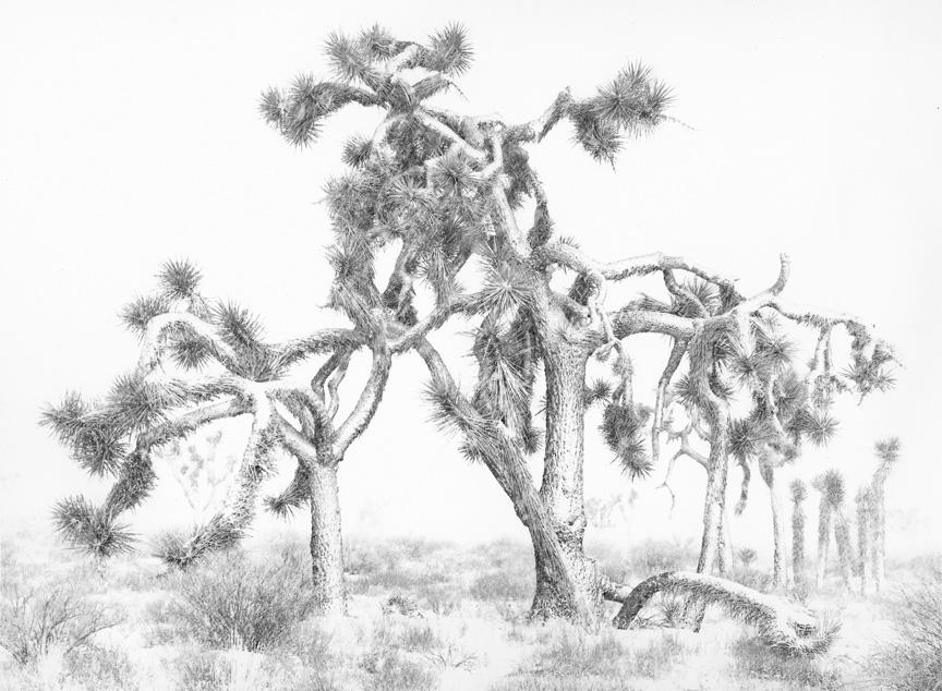 Sean Kernan -  Joshua Tree, Snow