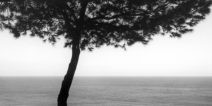 Sean Kernan -  Tree Kassandra Peninsula