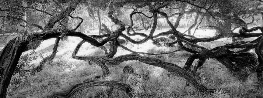 Sean Kernan -  Twisted Trees