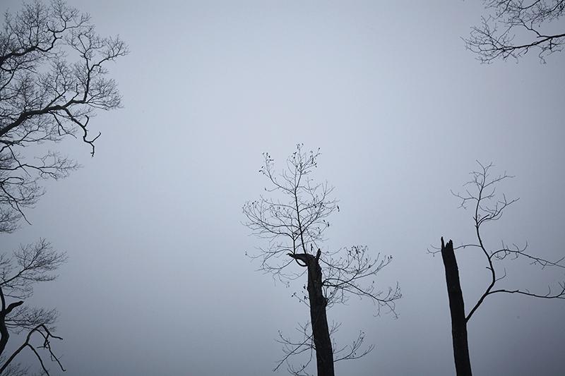 Sean Kernan -  Branches in Fog