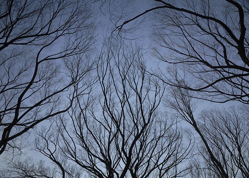 Sean Kernan -  Elm Branches