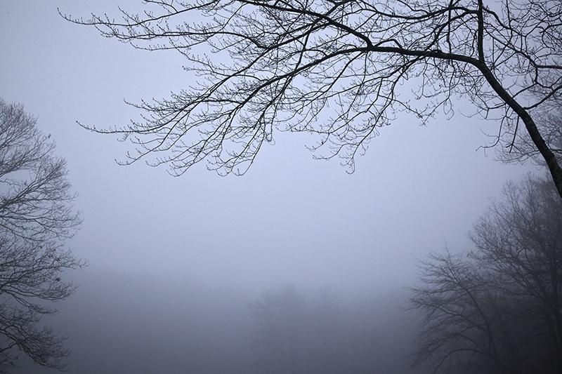 Sean Kernan -  Fog in Marsh